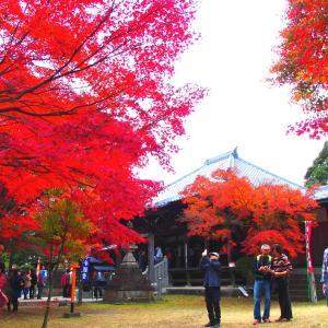 ❼これぞハイキング!東海自然歩道と寂光院の紅葉を楽しむ