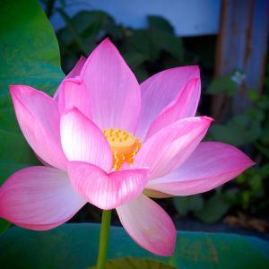 ❺神社仏閣と東谷山散策