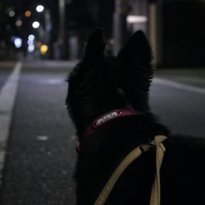 夜のおさんぽ