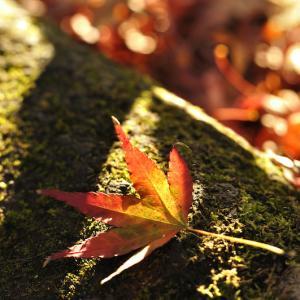 早く秋になぁれ