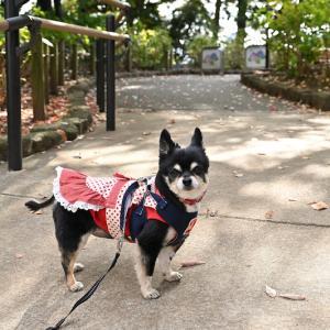 11/11 多摩川台公園のお散歩