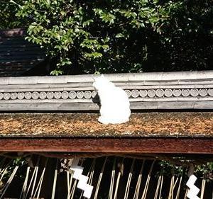 京都で猫さんたちに会えるスポット