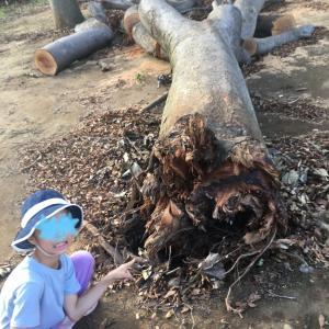 千葉市の台風の被害