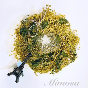 ★運命色ライトプラン「Mimosa」ミモザリリースいたしました。