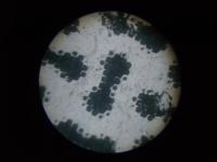 顕微鏡を修理する 4
