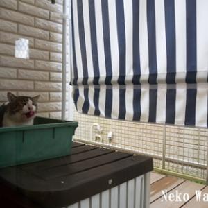 庭猫日記(165)