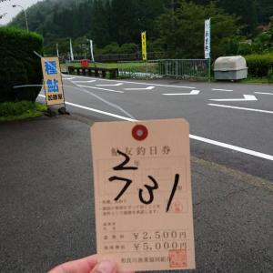 日本一の鮎 和良川