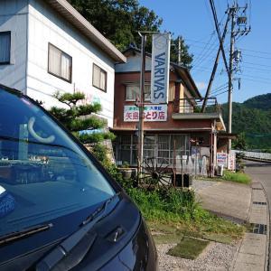 囮鮎4匹¥1000 板取川