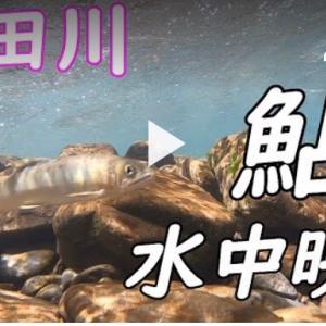 有田川水中映像YouTubeアップロード完了