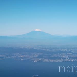 8年ぶりに日本へ里帰り