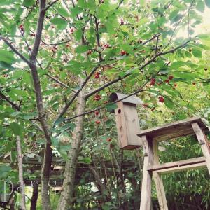 さくらんぼと小鳥の巣箱