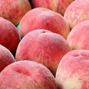 桃の季節、ブロンプトンで行く山梨のオススメ共選所