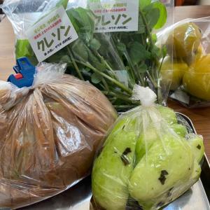 ルンルン気分でハヤト瓜の味噌粕漬け ♪
