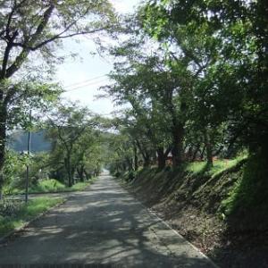 古寺清瀧寺の秋「はぎの花」