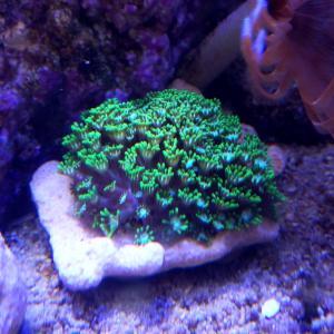 新サンゴ入海とその他