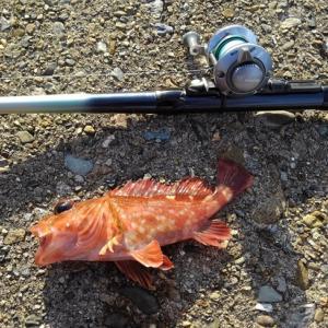10/28 越前海岸でエギング&穴釣り Lesson 59