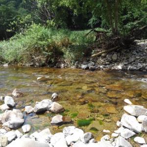 8/25 渇水の渓でアマゴを追う Lesson 49