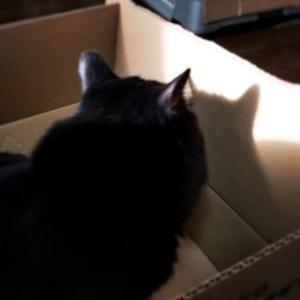 猫のシルエット(ΦωΦ)