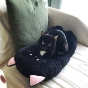 黒猫クッションと黒猫こなつ(ΦωΦ)