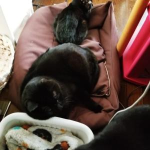お昼寝のときのこと(ΦωΦ)