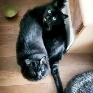 黒猫男子ねこーずで2ショットなの(ΦωΦ)