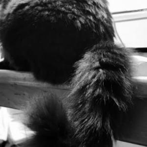 ふっさーな尻尾なの(ΦωΦ)