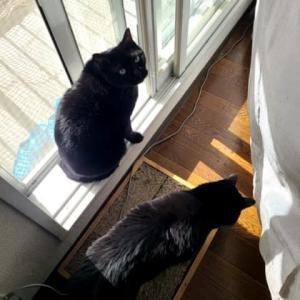 黒猫3にゃんず、みんなでワラワラ~(ΦωΦ)