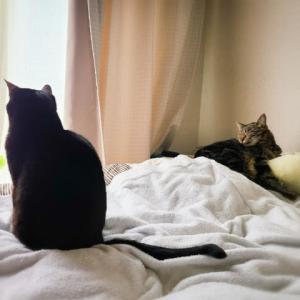 本日は女子猫ーずでまったりな朝だった(ΦωΦ)