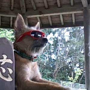 愛犬サンシンちゃんの誕生日