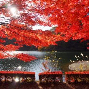 11/16 碓氷湖~めがね橋と妙義山 ダイジェスト!