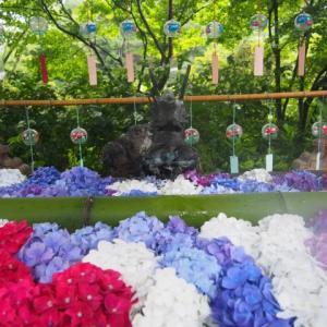 7/11 平日がオススメ!? 川場ドライブ☆花いっぱいの吉祥寺①