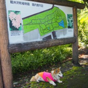 9/5 軽井沢植物園~湯川ふるさと公園へ散歩に