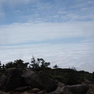7/3 霧降高原のキスゲ、見頃になりました!②