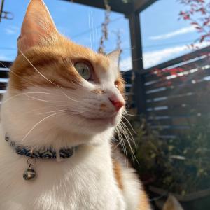 元保護猫チャーコの世界