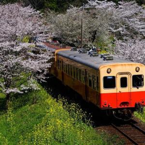 春爛漫の飯給駅