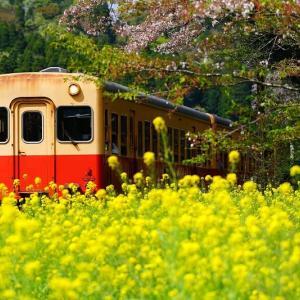 菜の花が咲き誇る上総大久保駅