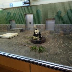 ジャイアントパンダのタンタン(旦旦)可愛い! 〜神戸市立王子動物園〜