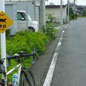 T氏と名栗サイクリング!