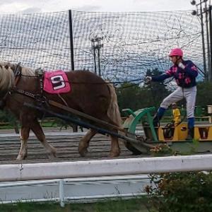 初体験の競馬