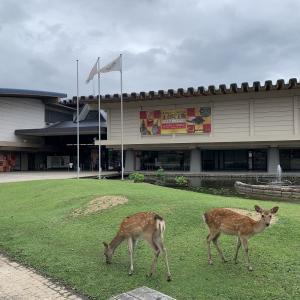 奈良国立博物館 神の使い