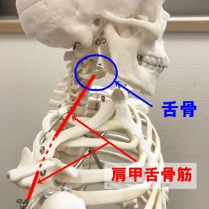 舌骨をゆるめる 感情を抑圧することで舌は緊張/呼吸が浅くなる/体調不良へと
