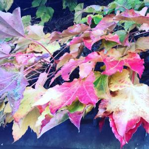 日々是好日 秋のおはらい町、五十鈴川を散歩