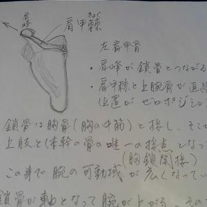 簡単に考える弓道射法八節