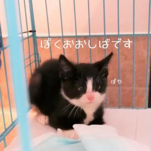 ★新着★明日9月19日(土)は譲渡会です!!