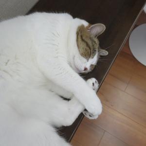 癒される寝顔