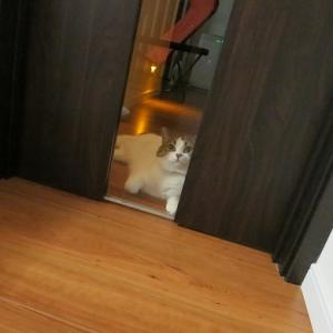 ドア越しに見つめ合い