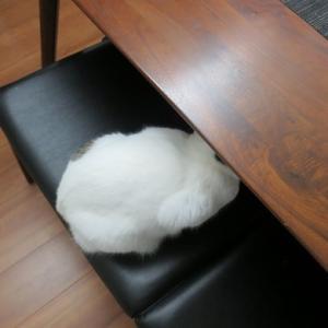 白猫み~つけた♪