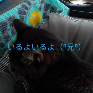 ぎゃく 義兄弟 2020/4/9