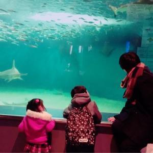 2018初水族館は葛西臨海水族園