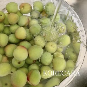 || 『梅しごと2021』甘味が苦手なヒト必見♪初レシピに挑戦 ||